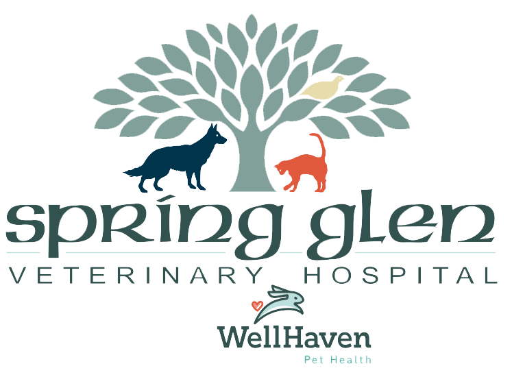 Spring Glen Veterinary Hospital