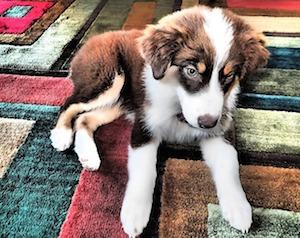 puppy-402023 640